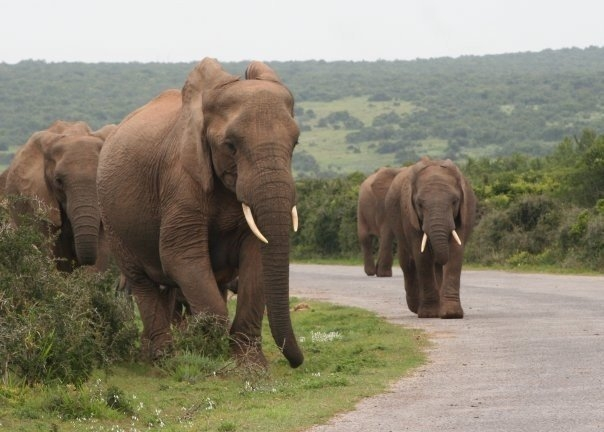 7 Day Addo Game Drive