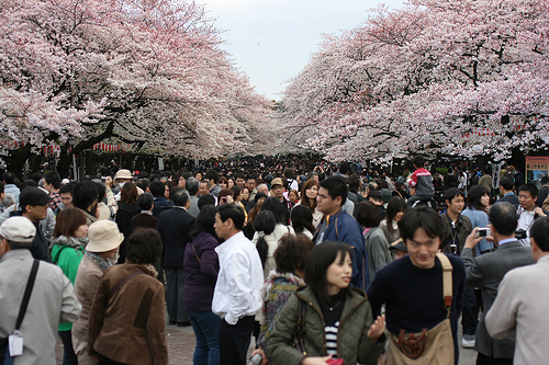 Sakura in Ueno by kadubla on Flickr