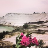 Gorgeous pink flowers in  Pamukkale