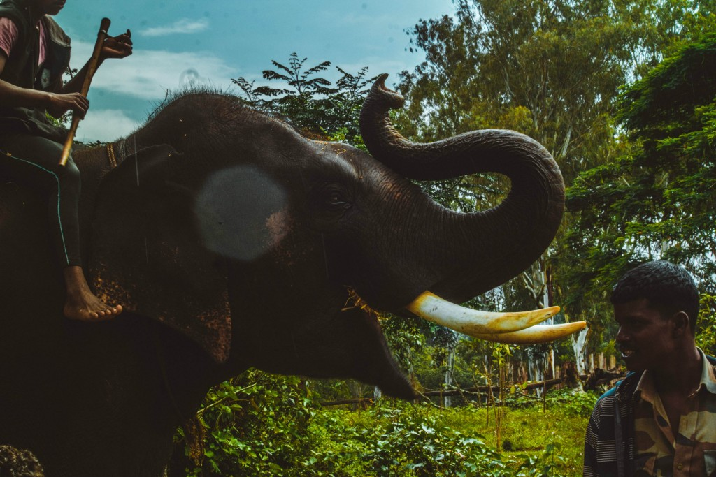 Photo by Pratham Gupta on Unsplash