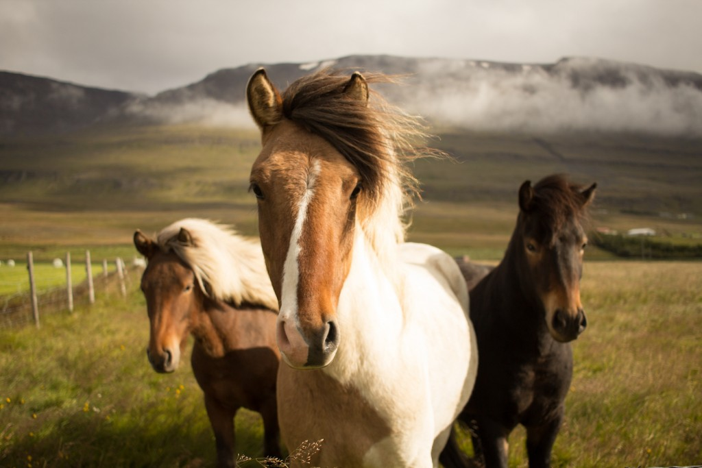 TheseHorses'HairIsBetterThanYours