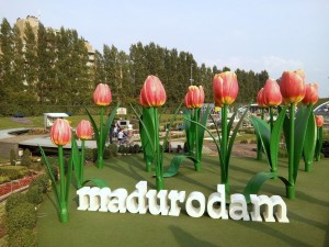The giant tulips at Madurodam