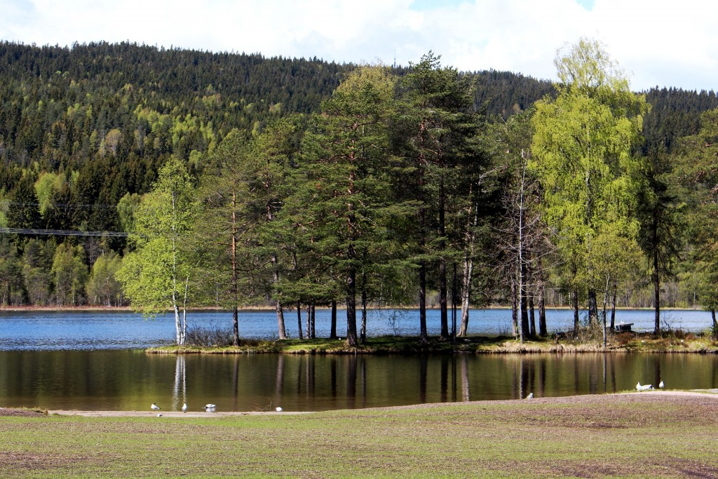 Serenity at Sognsvann