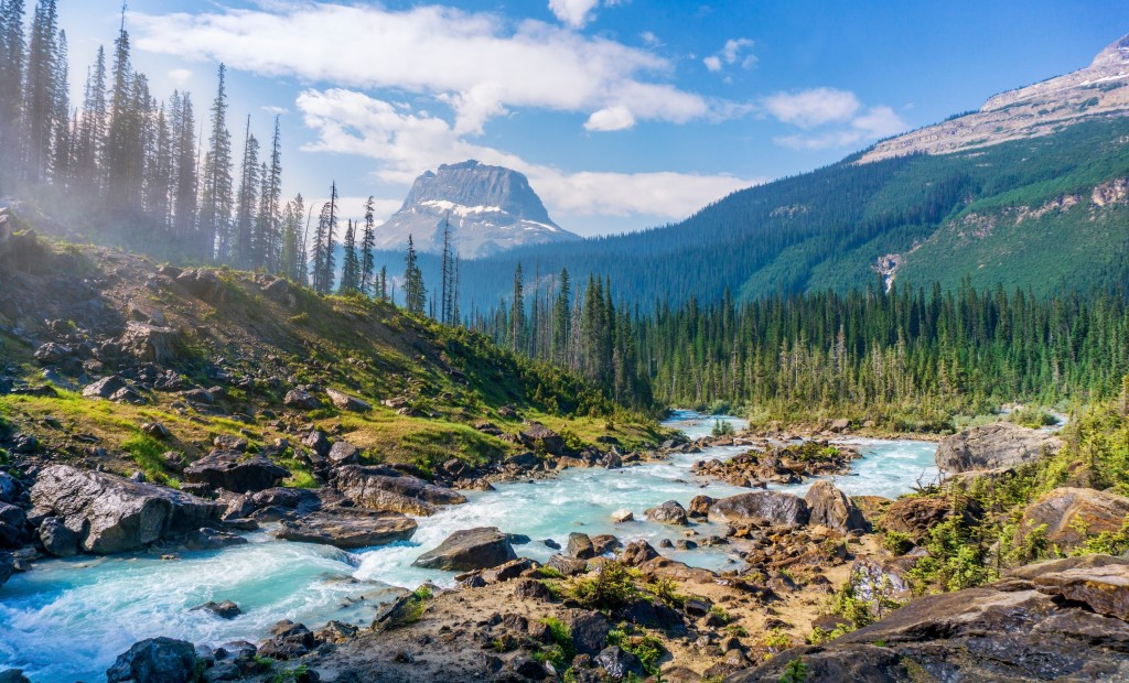 A river in Yoho National Park