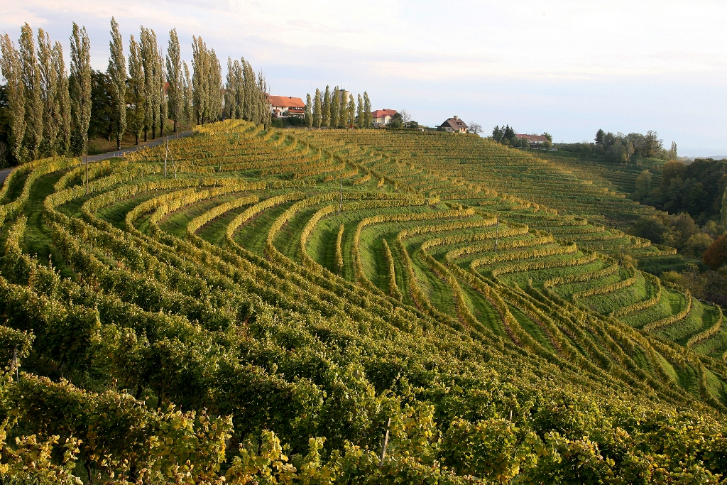 Vineyards in Jeruzalem